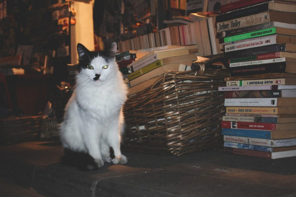 Katze10