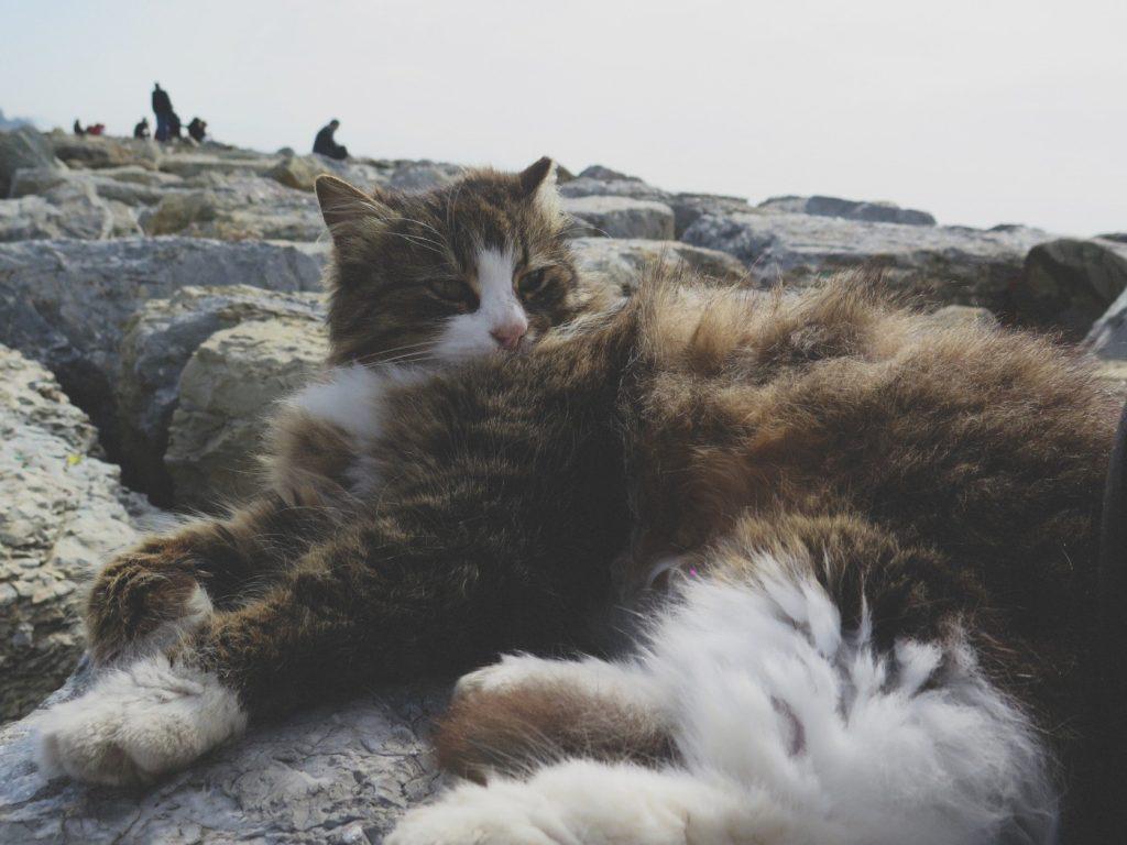 Katze13
