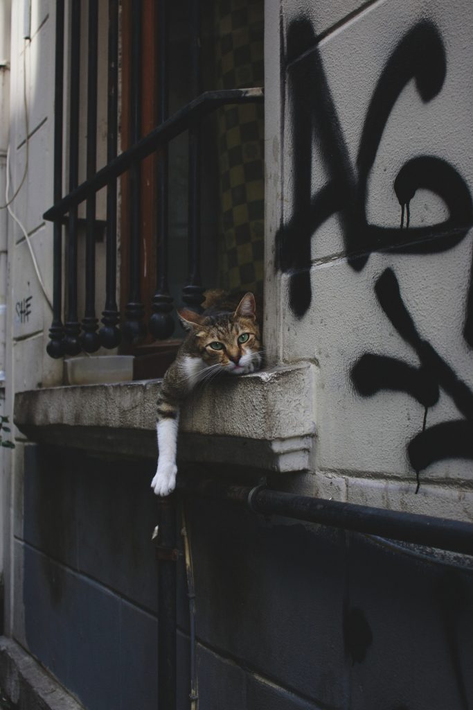 Katze14