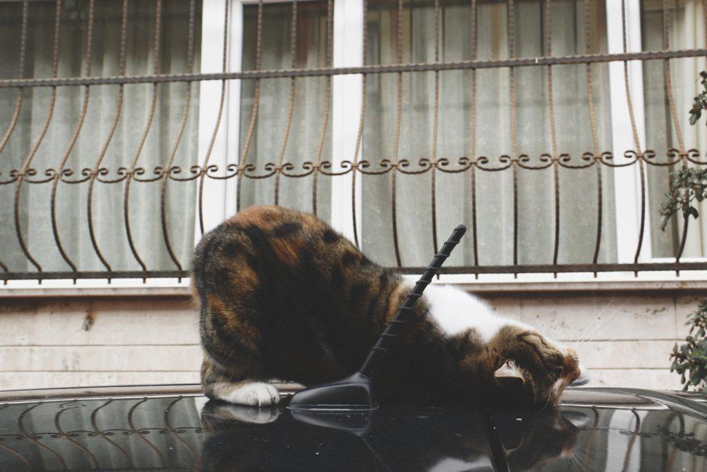 Katze17
