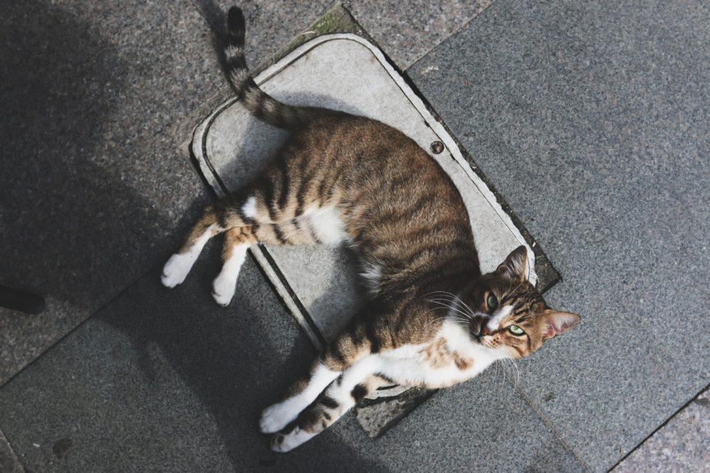 Katze18