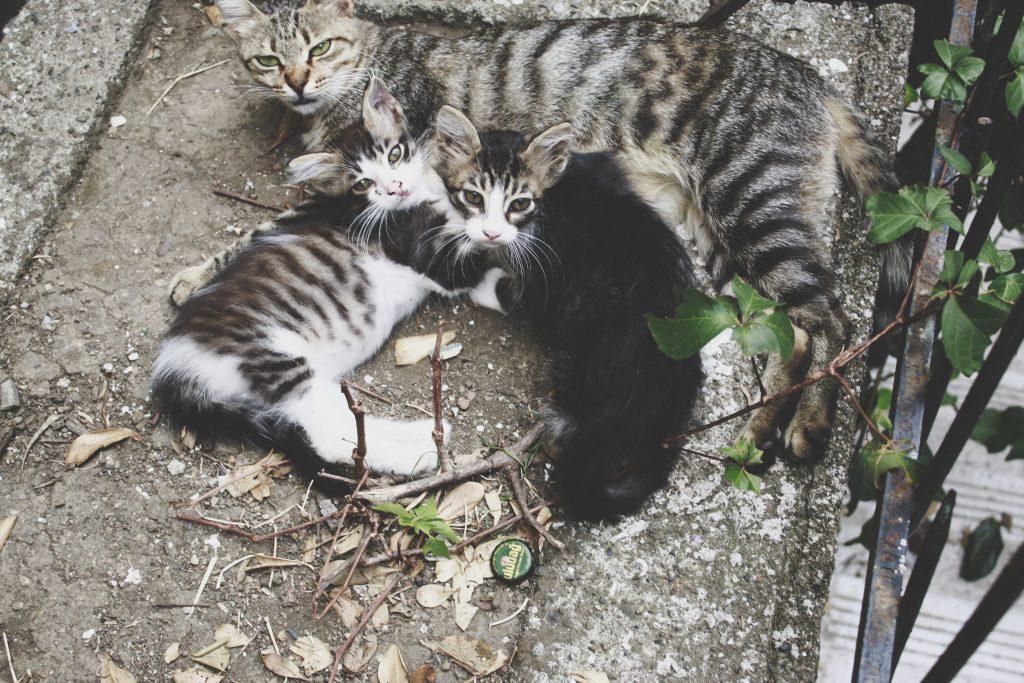 Katze5