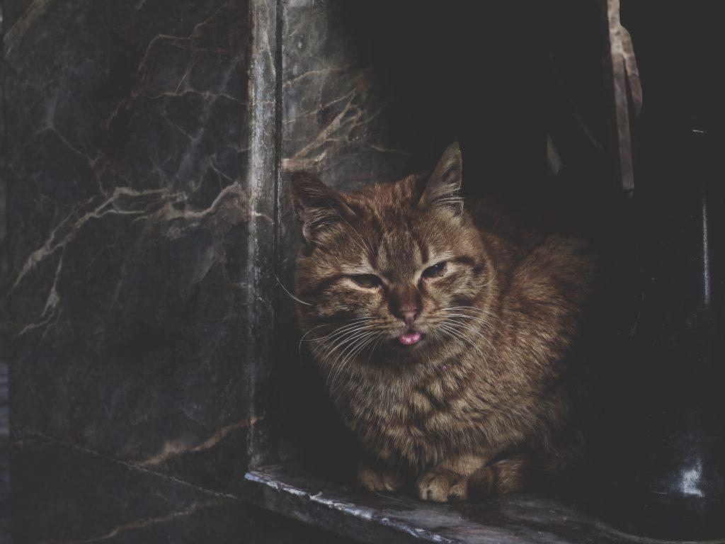 Katze8